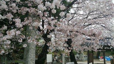 yusui2.jpg